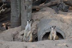 野生生物 免版税图库摄影