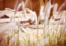 野生生物 图库摄影