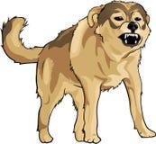 野生疯狂的狗 免版税库存图片