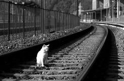 野生的猫 免版税库存照片