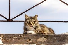 野生的猫 图库摄影