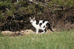 野生离群猫 库存照片