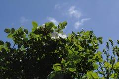 野生罗斯花和植物 免版税库存图片