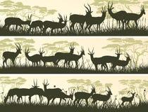 野生羚羊水平的横幅在非洲大草原的 库存图片