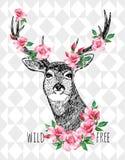 野生自由鹿 免版税库存照片