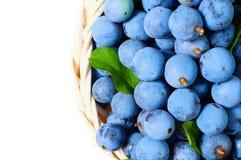 野生莓果黑刺李 库存图片