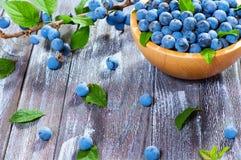 野生莓果黑刺李 免版税库存照片