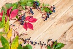 野生葡萄莓果特写镜头在木背景的 免版税库存照片