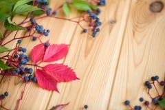 野生葡萄莓果特写镜头在木背景的 免版税库存图片