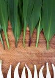 野生蒜在木背景的葱属tricoccum 库存图片