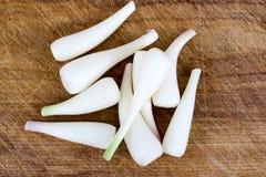野生蒜葱属tricoccum 图库摄影