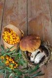 野生蘑菇和莓果在庭院桌上 免版税库存照片