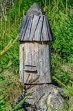 野生蜂的蜂箱 免版税库存图片