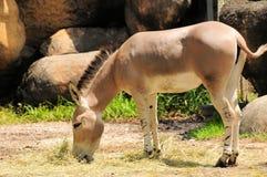 野生资产在动物园里 库存照片