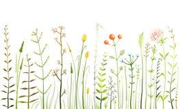 野生领域花和草在白色收藏 免版税库存照片