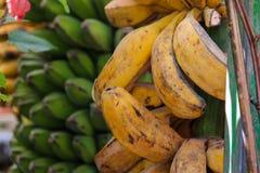 野生香蕉 库存照片