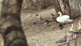 野生鸟在鸟公园 影视素材