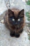 野生黑小猫 库存图片