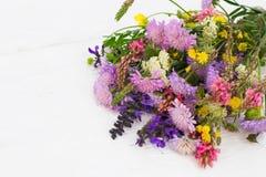 野花五颜六色的花束,白色背景 免版税库存图片