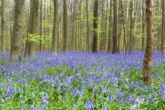 野花会开蓝色钟形花的草森林 库存照片