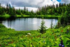 野花包围的Tod湖在托德山附近上面在Shuswap高地的填装了高山草甸 库存图片