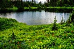 野花包围的Tod湖在托德山附近上面在Shuswap高地的填装了高山草甸 免版税图库摄影