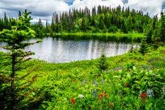 野花包围的Tod湖在托德山附近上面在Shuswap高地的填装了高山草甸 图库摄影