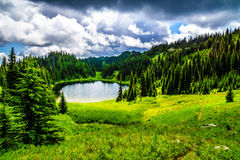 野花包围的Tod湖在托德山附近上面在Shuswap高地的填装了高山草甸 库存照片