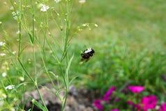 野花和土蜂 免版税库存图片
