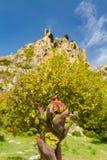 野花和圣徒Hilarion在背景,凯里尼亚中防御 免版税图库摄影