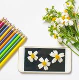 野花和在白色背景隔绝的智能手机装饰 免版税库存图片