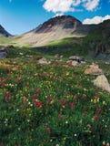 野花和峰顶在Ice湖盆地,圣胡安范围,科罗拉多的V4 免版税库存照片