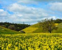 野花和橡树 免版税库存照片