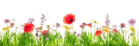 野花和绿草刀片在白色前面,横幅 库存照片
