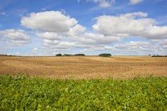 野花和耕种的土壤 免版税图库摄影