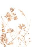 野花和草在白色 免版税库存图片