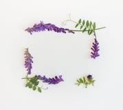 野花和草本框架  顶视图 图库摄影