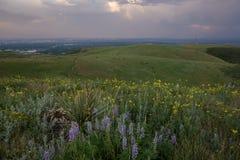 野花和麋在绿色山 Lakewood,科罗拉多 库存图片