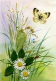 野花和蝴蝶 库存图片