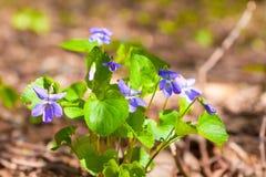 野花在一个晴天 库存照片