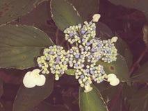 野花在俄亥俄 库存照片