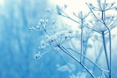 野花在冬天 免版税库存图片