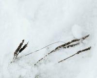野花在冬天 免版税库存照片