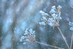 野花在冬天 库存图片