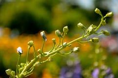 野花在夏天 图库摄影
