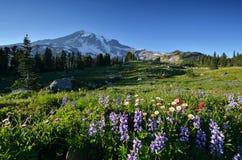 野花在天堂, Mt.更加多雨的国家公园 免版税库存图片