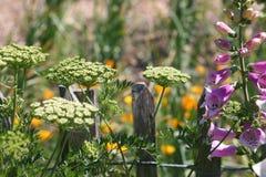 野花在庭院里 免版税库存图片