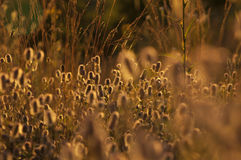 野花在日落期间的草甸 库存图片