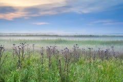 野花在有薄雾的早晨 库存照片