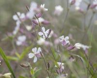 野花在草坪的秋天 图库摄影